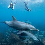 イルカの写真を撮るのにお勧めの防水コンデジ ~オリンパスTG-4の可能性を考える~