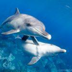 ドルフィンスイムを始めよう! ~可愛いイルカの水中写真を撮るコツ~