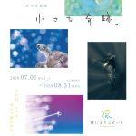 陽だまりスタジオ水中写真展「小さな奇跡」開催のお知らせ