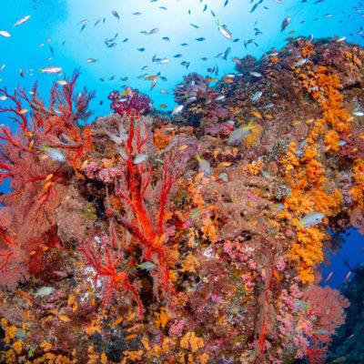 慶良間 ウチザン礁
